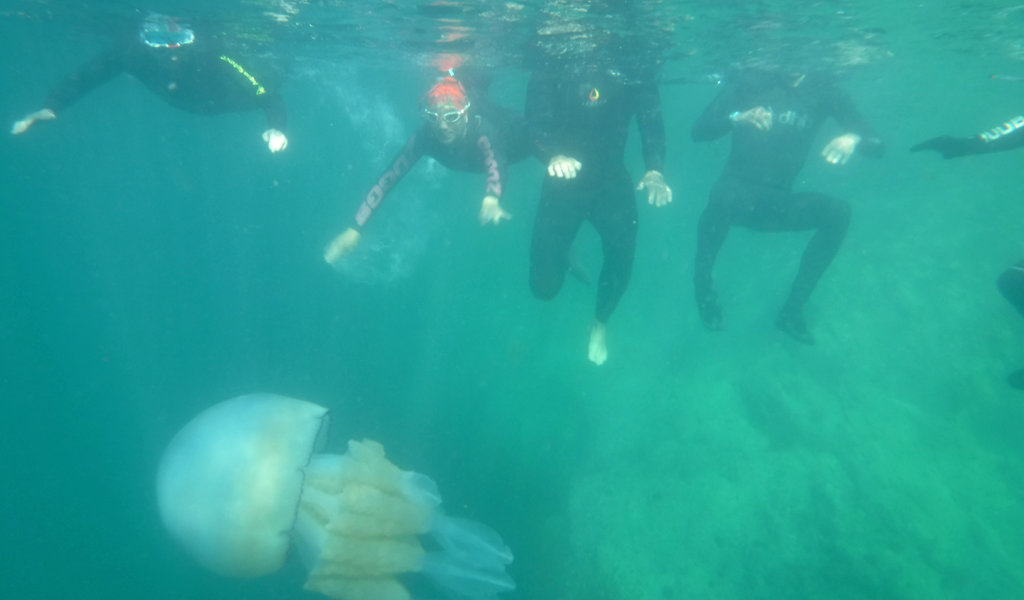 Barrel Jellyfish with swimmers